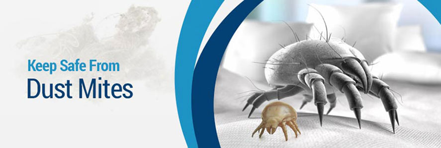 Removing Dust Mites in Rochester, Buffalo & Syracuse, NY