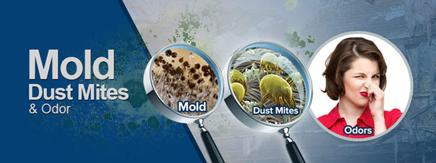 Mold, Dust Mites & Odor in Rochester New York