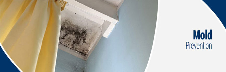Preventing Mold in Rochester, Buffalo & Syracuse, NY